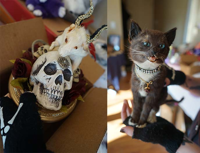 taxidermy kitten, mouse