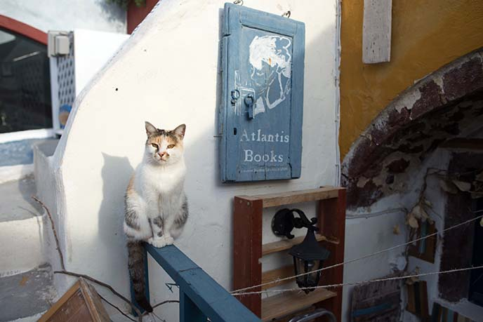 greek bookstore cat atlantis books