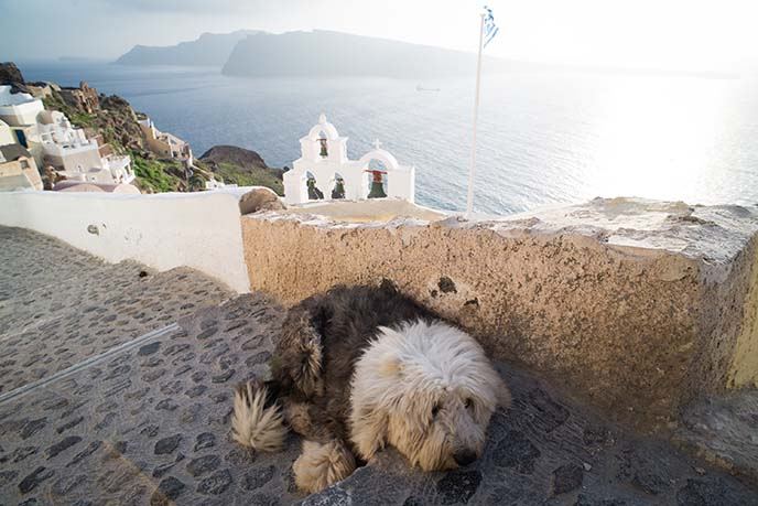 cute sheepdog santorini cafe
