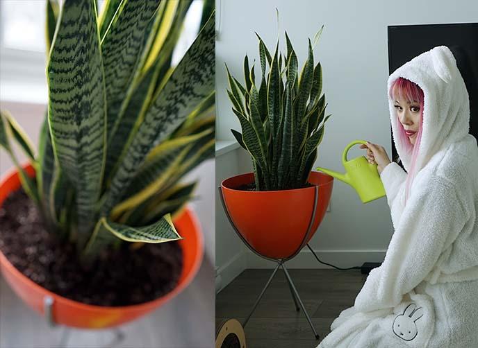 mid century modern plant, hip haven