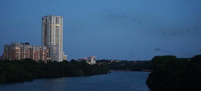 austin skyline flock bats