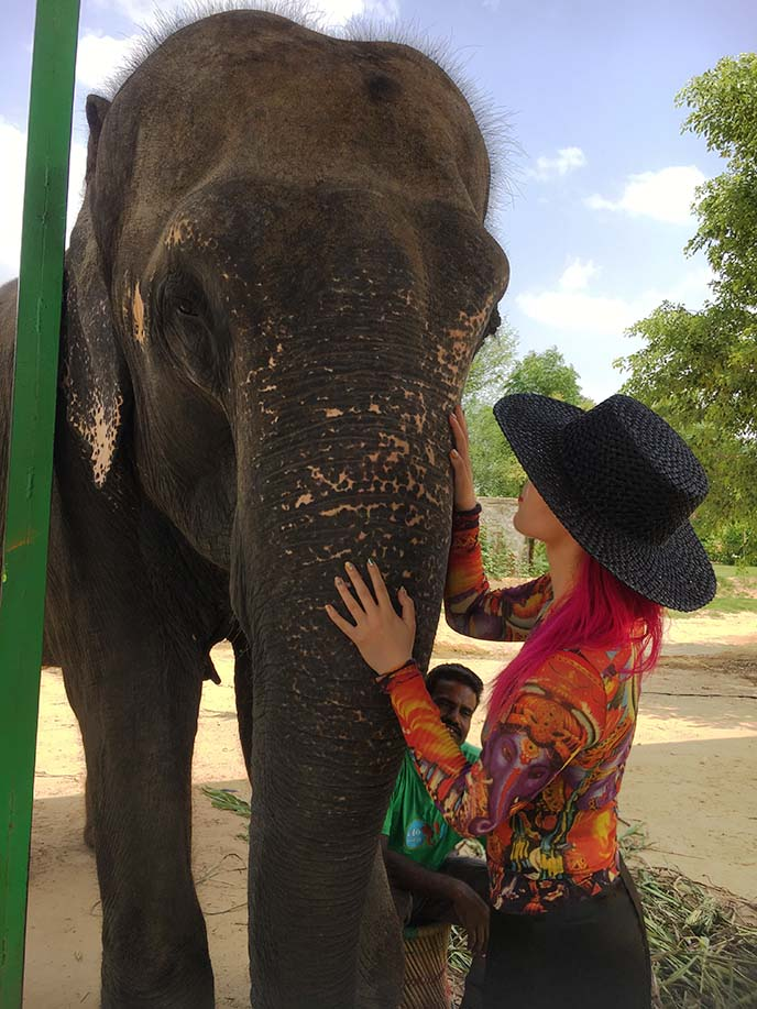 jaipur elefantastic sanctuary farm