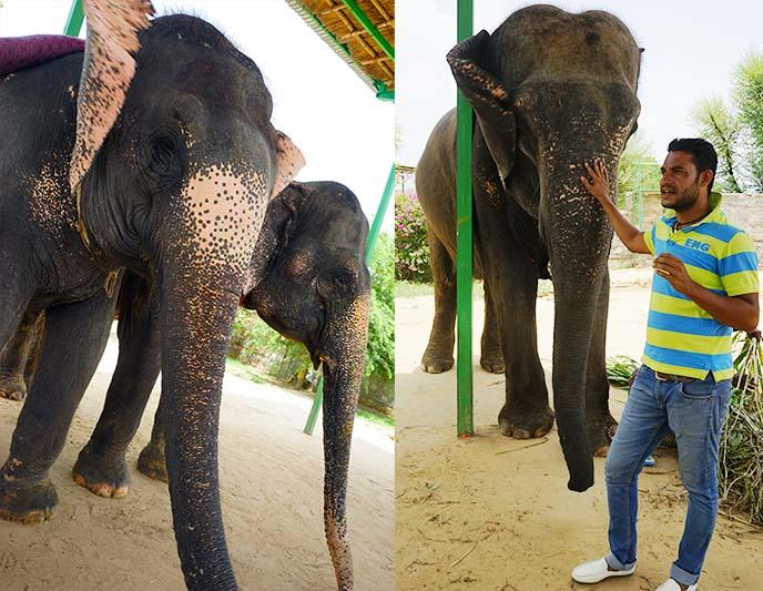 rahul elefantastic ethical farm