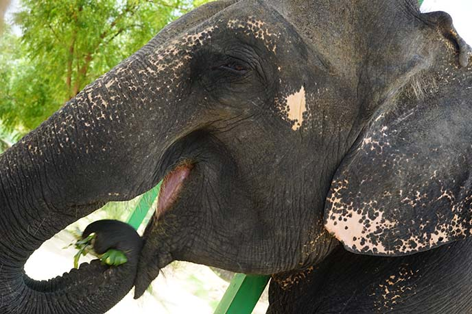 elephant rescue jaipur
