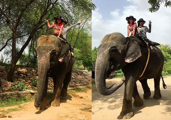 ethically ride elephant