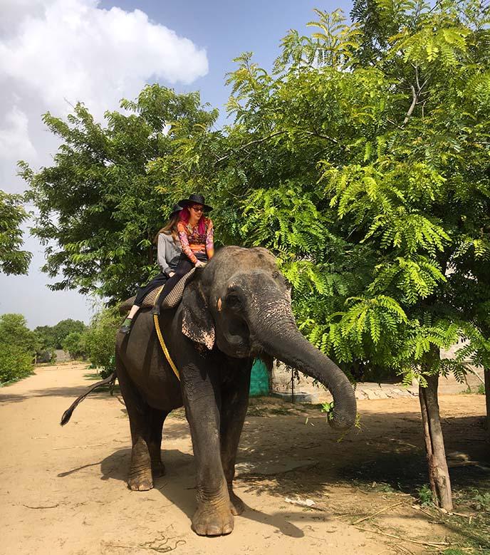 ride elephants india