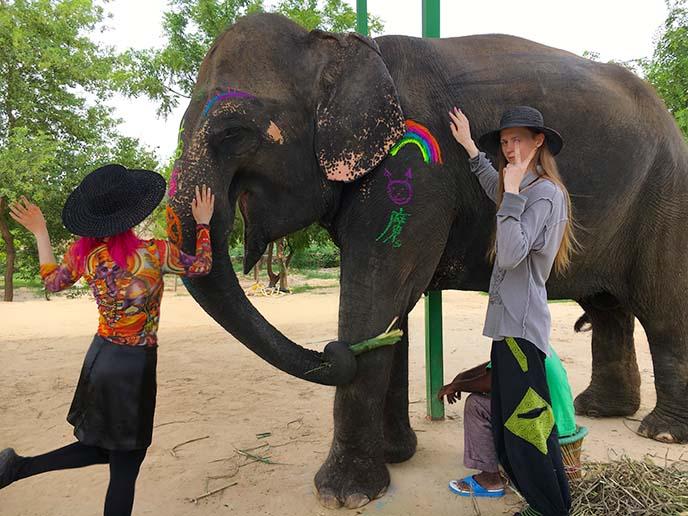 jaipur ethical elephant sanctuary