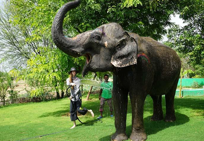 elephant village jaipur