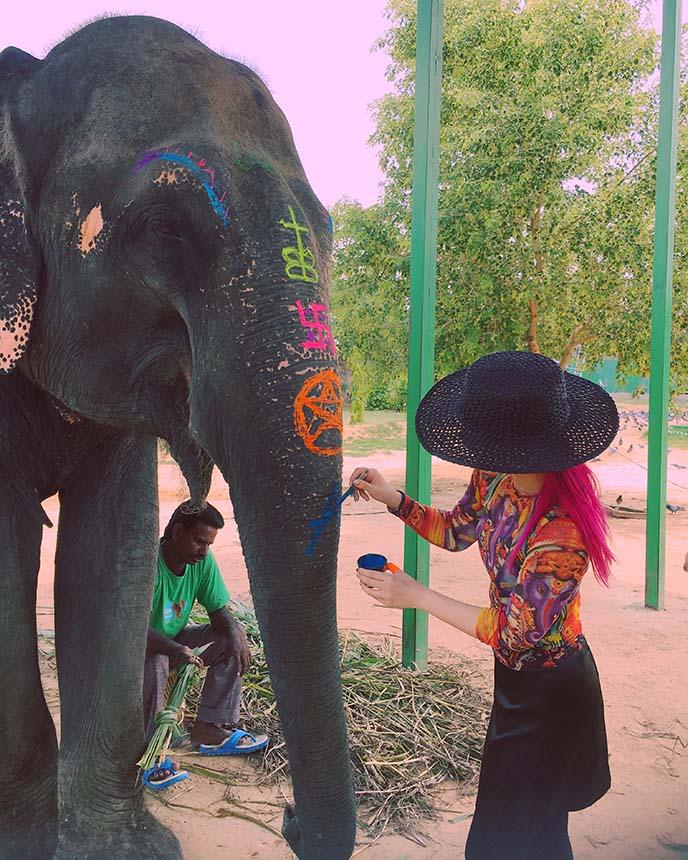 painted decorated elephant india