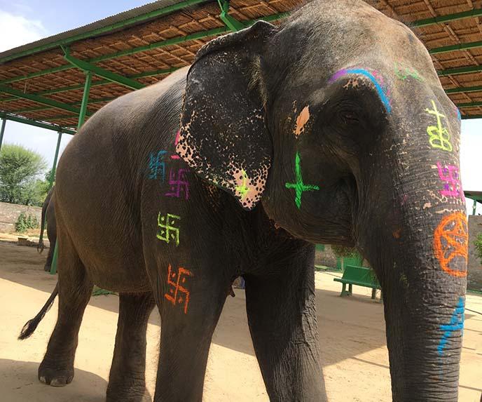 painting elephants jaipur india