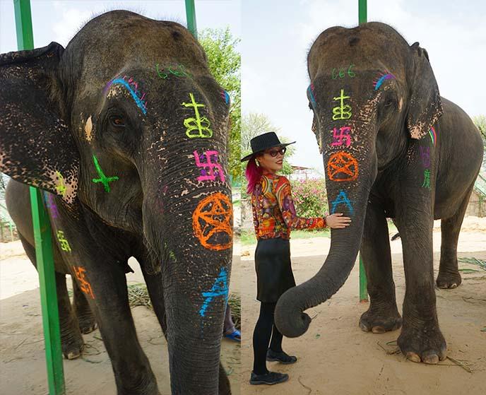 jaipur elephant joy india