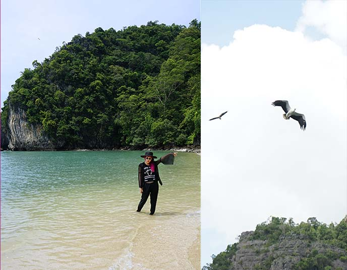 langkawi eagles, eagle watching