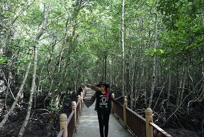 langkawi mangrove forests tour