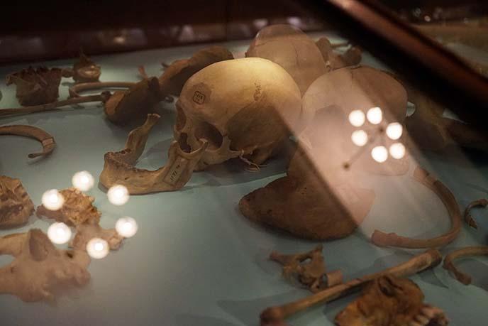 neanderthal prehistoric burial ground skulls