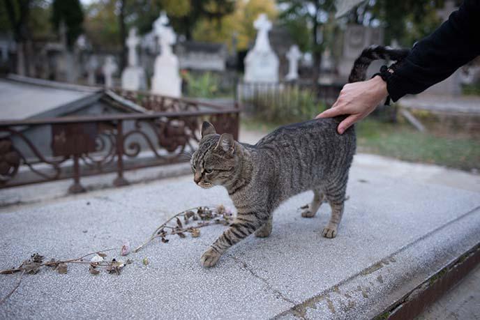 cat on coffin, graveyard