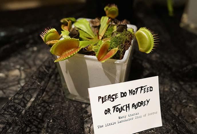 audrey carnivorous plants halloween