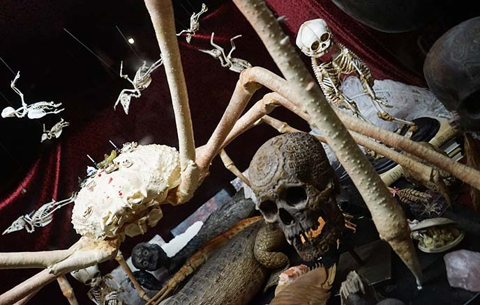 skulls bizarre goth museum london
