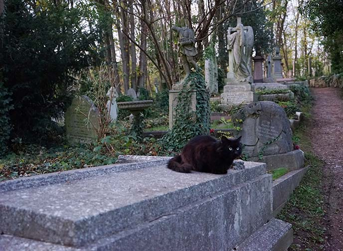 black cat on coffin