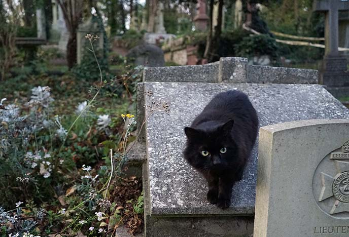 black cat graveyard cemetery