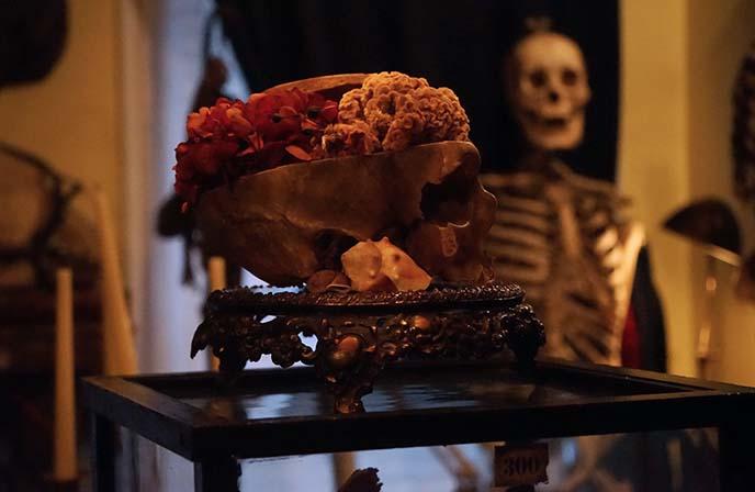 human skull flowers inside