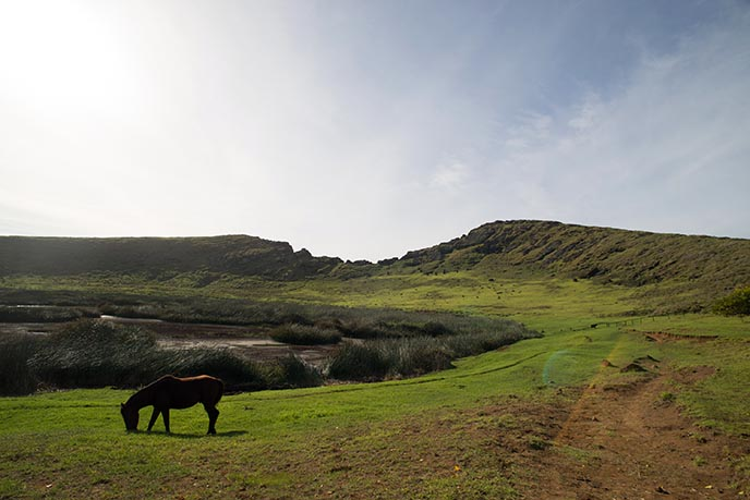 easter island horse, wild animals