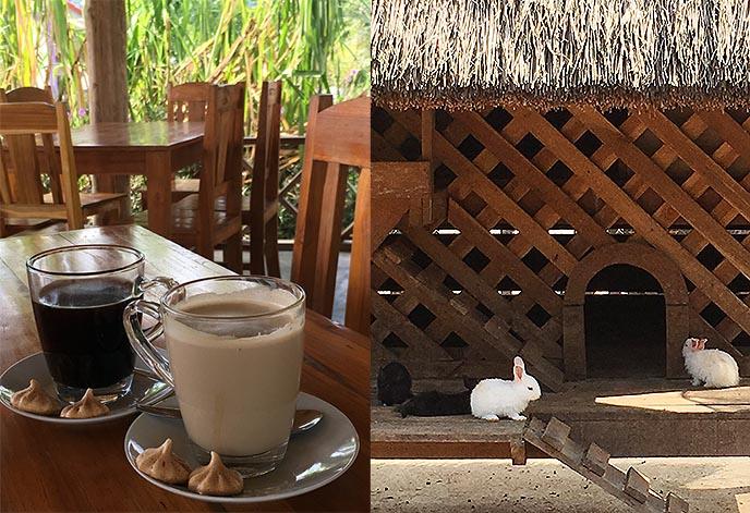 buffalo dairy luang prabang coffee cafe