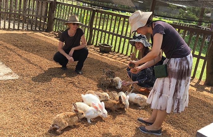 bunny rabbit farm luang prabang