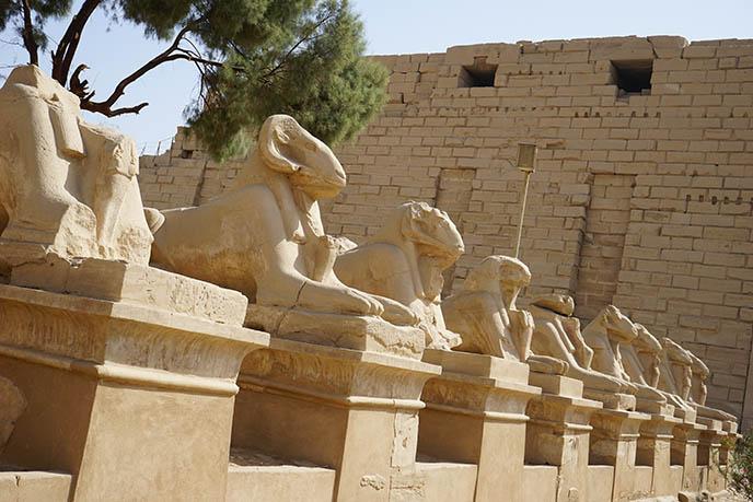 ram headed row sphinx karnak