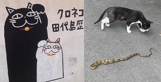 cat island japan enoshima