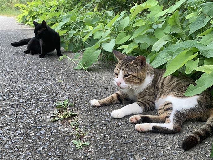 cat island tashirojima japan