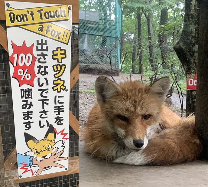 zao fox village japan travel guide