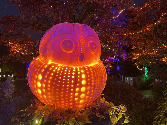 pumpkin carved like owl, owl jack o lantern