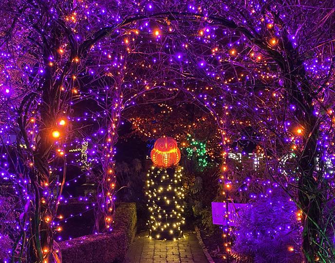 Van Dusen Glow in the Garden light show