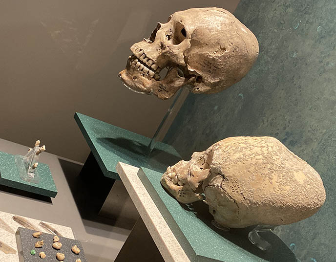 elongated pressed mayan skulls conehead