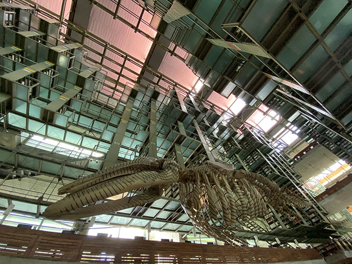 whale skeleton beautiful mexico city library Vasconcelos
