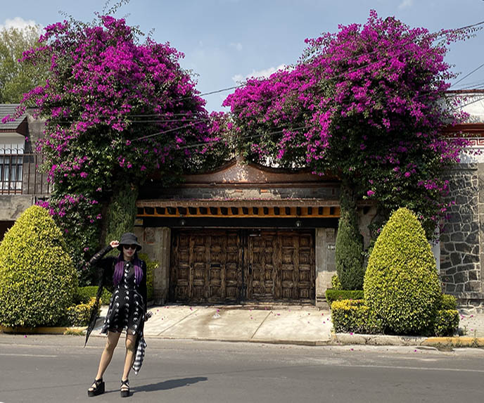 coyoacan flowers elegant buildings rich mexico city