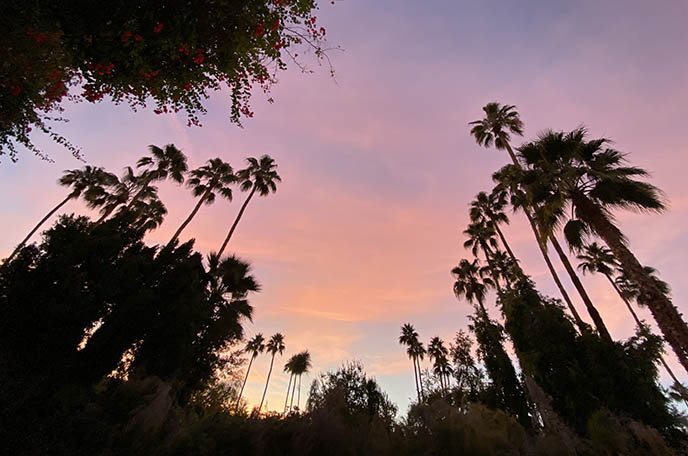 pink sunset palm trees palm springs