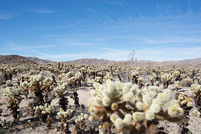palm desert california cactus gardens