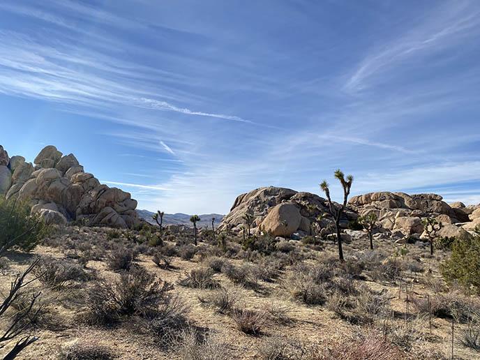 palm springs desert landscape dry cactus