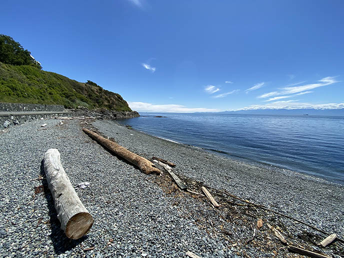 willows beach victoria logs scenery