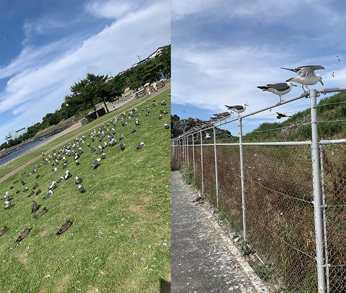 japan bird watching seagulls temple