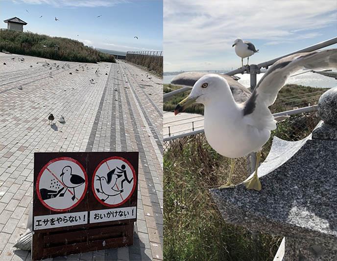 japan seagull temple birds
