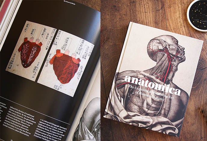 gothic medical illustrations coffee table book anatomica joanna ebenstein