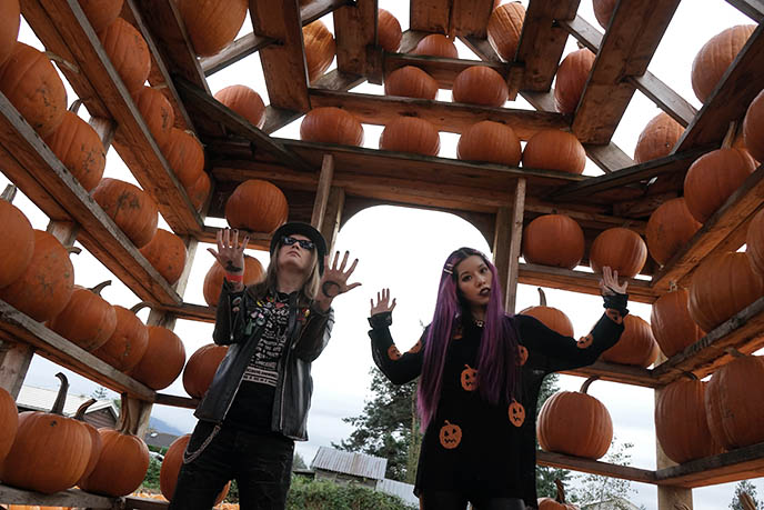 pumpkin house vancouver british columbia pumpkins attraction