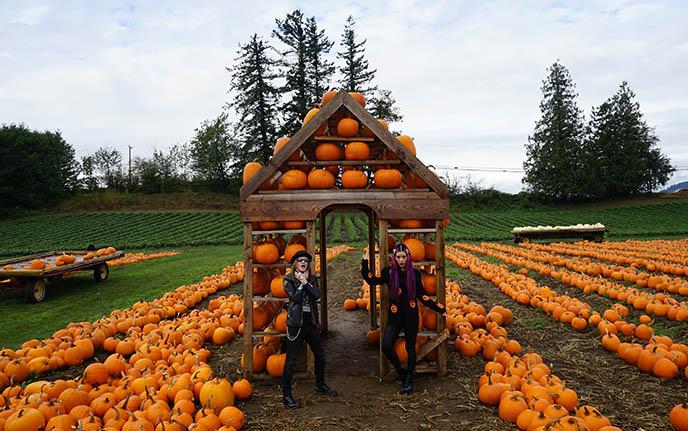 jack o lantern festival pumpkin carving vancouver