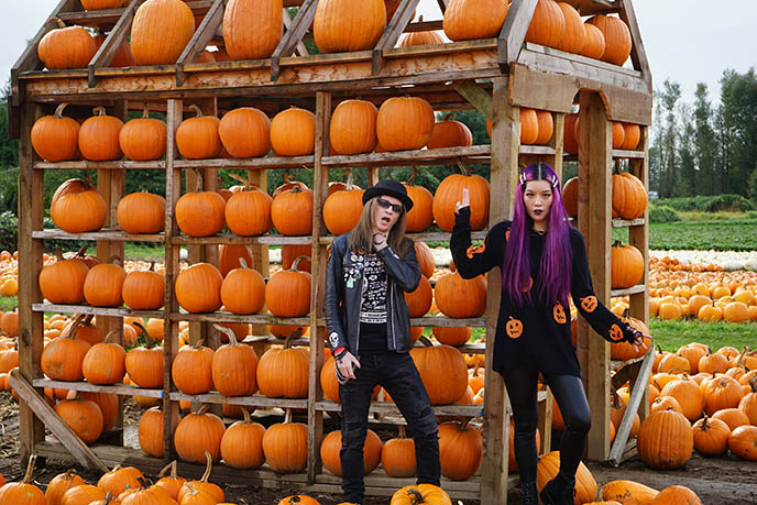 Maan Farms Pumpkin Patch Near Vancouver