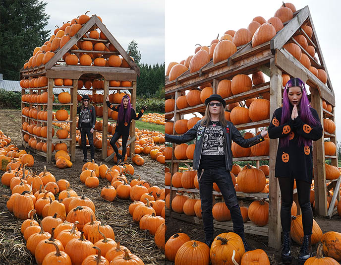 pumpkin house instagram home made from pumpkins