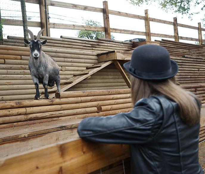 maan farm goat yoga vancouver bc