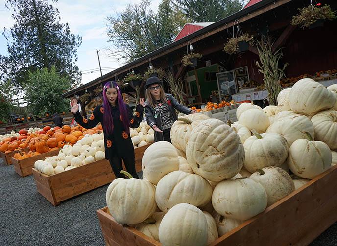 white pumpkins sale vancouver