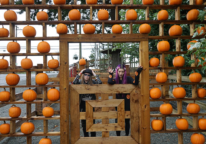 lower mainland vancouver pumpkin picking events